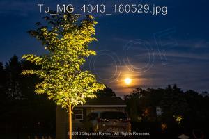 Tu MG 4043 180529